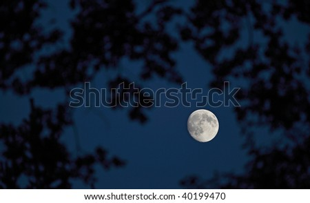 Full moon on the dark night sky seen through branches of a majestic tree - stock photo
