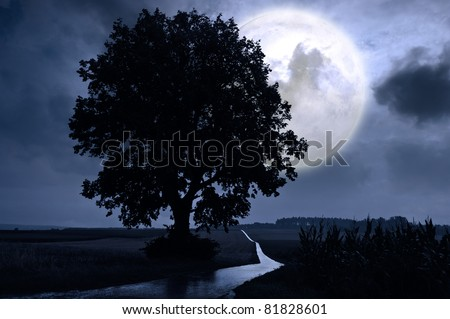 Full moon over a corn field - stock photo