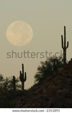 Full Moon Over Cactus - stock photo
