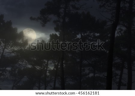 Full moon rising over a misty pine forest at night - stock photo