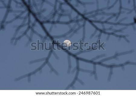 Full Moon Shining Through Black Branches - stock photo