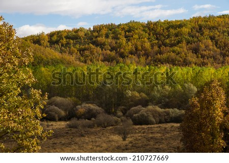Full poplar forest and scrub oaks with autumn colors