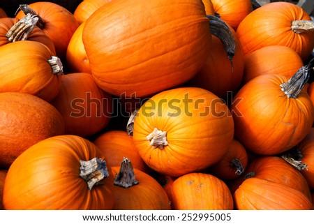 full pumpkin background - stock photo