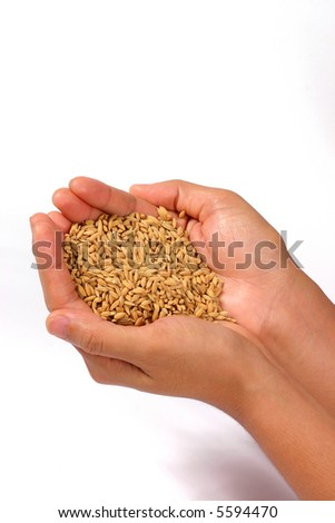 full view of hands with rice. Concept for agriculture setting
