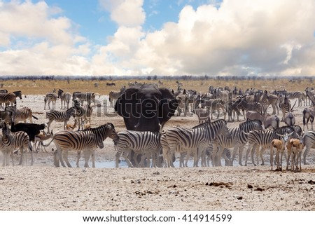 full waterhole with Elephants, zebras, springbok and orix. Etosha national Park, Ombika, Kunene, Namibia. wildlife photography - stock photo