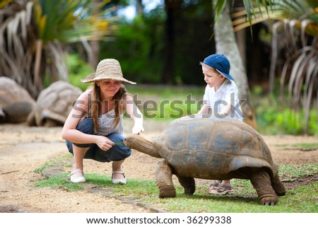 Fun activities in Mauritius. Family feeding giant turtle. - stock photo