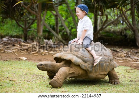 Fun activities in Mauritius. 4 years old boy riding giant turtle. - stock photo