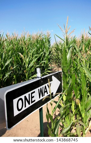 Fun corn maze in Spokane, Washington. - stock photo