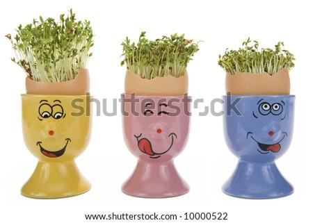 Fun eggcups, eggshells and growing Garden cress (Lepidium sativum) on white background - stock photo