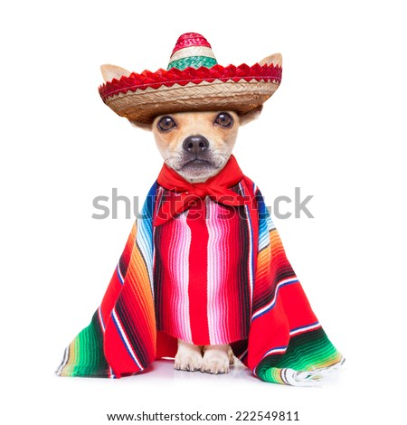 fun mariachi mexican chihuahua dog wearing a sombrero hat and red poncho, isolated on white background - stock photo
