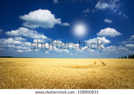 Fun sun and field full of wheat by summertime. - stock photo