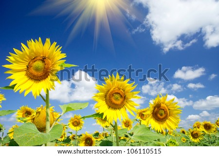 Fun sunflowers growth against blue sky. - stock photo