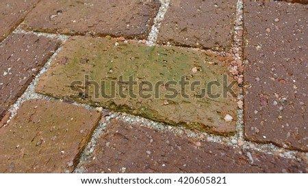 fungal growth on brick surfaces in high moisture condition - stock photo