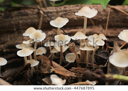 Fungi.Fungi growth.Mushroom family. select focus.soft focus the field for background. - stock photo