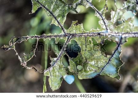 Fungicide on a ruined leaf - stock photo