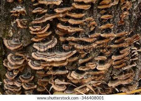 Fungus growing on a tree - stock photo