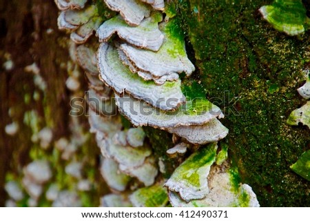 Fungus growing on a tree full of moss on March 26, 2016 - stock photo
