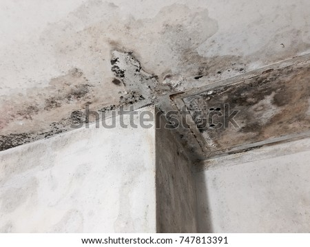 Fungus Texture Dirty Wall And Roof In Toilet Interior. House Problem  Concept.
