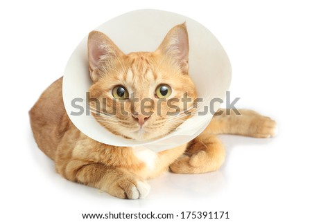 funnel collar cat - stock photo