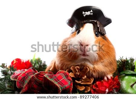 Funny Animal. Guinea Pig Christmas portrait - stock photo