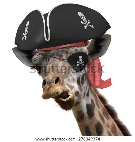 Funny animal picture cool giraffe wearing stock photo - Girafe rigolote ...