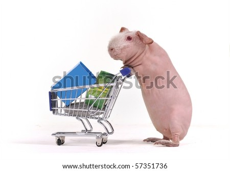 Funny Animal Shopper with a Supermarket Cart - stock photo