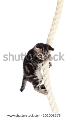 funny baby cat hanging on rope - stock photo