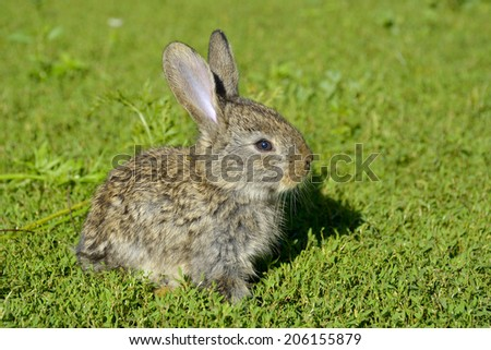 Funny baby rabbit in grass  - stock photo