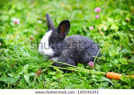 Funny baby rabbit with a carrot in grass - stock photo