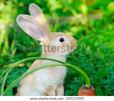 Funny baby rabbit with a carrot on grass - stock photo