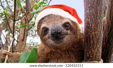 Funny baby sloth in a Christmas Santa hat - stock photo