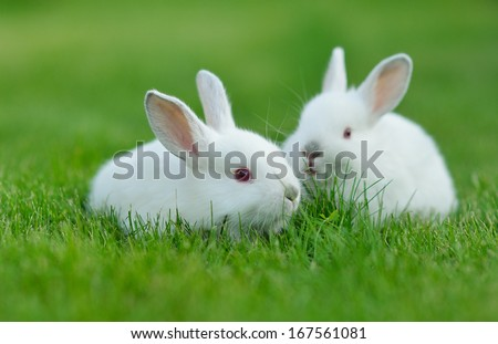 Funny baby white rabbit in grass - stock photo