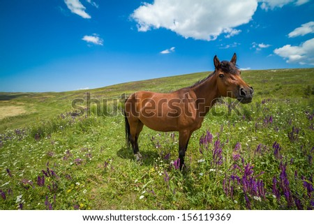 Funny bay horse on the grassland looking at camera - stock photo