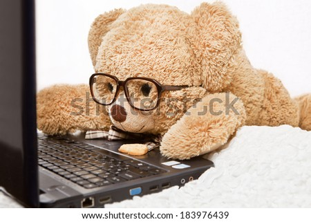 Funny bear in glasses lying is working at the computer - stock photo