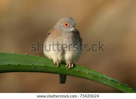 funny bird sitting on a cactus - stock photo