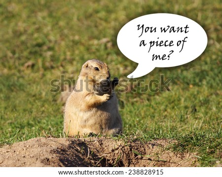 Funny black-tailed prairie dog looking for a fight with fists up in the air, speech bubble - stock photo