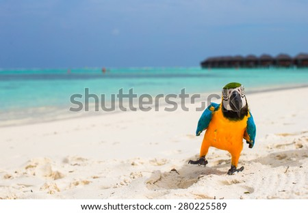 Funny bright colorful parrot on the white sand in the Maldives - stock photo