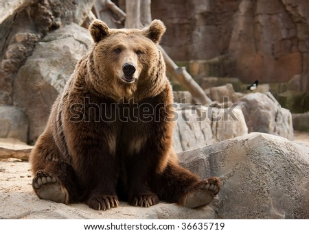 Funny brown bear and a bird on the background - stock photo