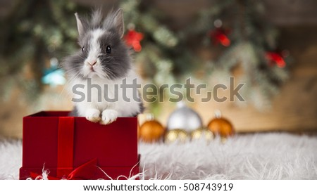 Funny bunny and Christmas background with winter decoration