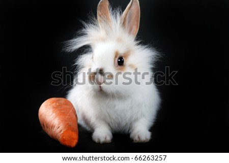 funny bunny with a carrot