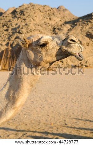 funny camel head over blurred rocks and blue sky - stock photo