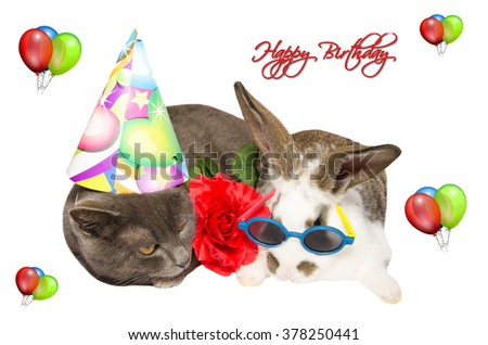 Funny Cat Baby Bunny Party Accessories Stock Photo Image Royalty