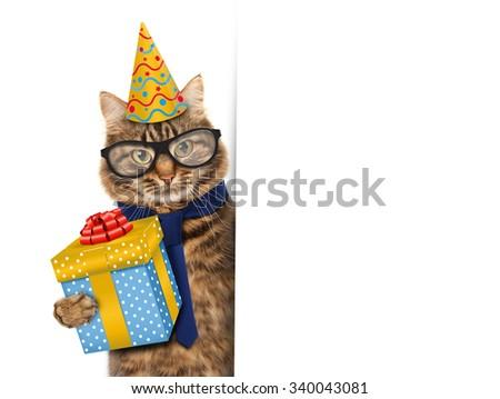 Funny cat celebrates birthday.   - stock photo