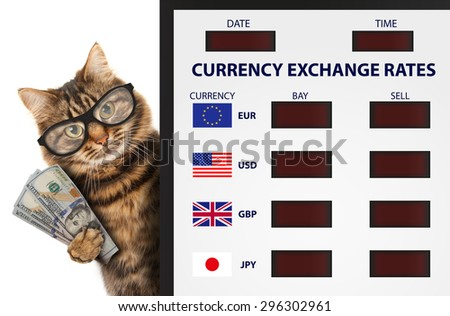 Funny cat, currency exchange. Currency exchange rate. Business scene. - stock photo