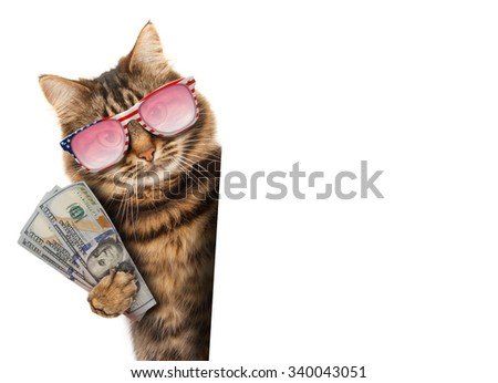 Funny cat - currency exchange rate. Business scene. - stock photo