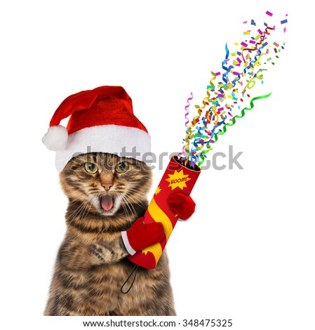 Funny cat in christmas hat with petard. - stock photo