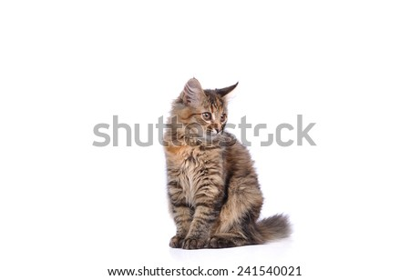 Funny cat isolated on white - stock photo