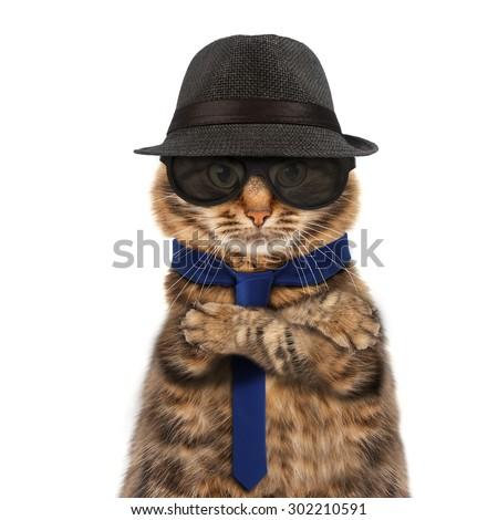 Funny cat - mafia boss - stock photo