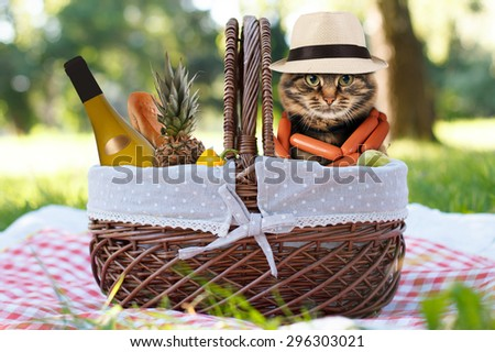 Funny cat on a picnic. Beautiful summer day - stock photo