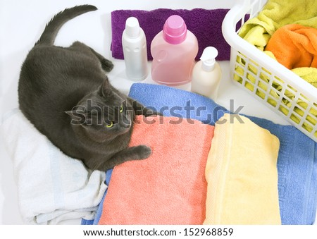 Funny cat on colorful laundry to wash - stock photo